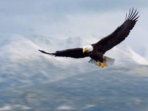 eaglebluesky